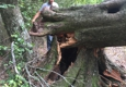 Mountaineer Tree Surgeons