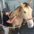 Four Seasons Equine Veterinary Service