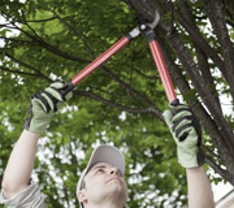 Hawthorne Brothers Tree Service, Inc - Bedford Hills, NY