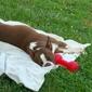 Colony Animal Hospital - Winchester, VA. Tobys Vet