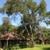 Alamo Tree Service