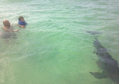 Northwest Florida Dolphin and Fishing Tours LLC - Panama City, FL