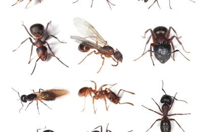 A2Z Pest Control - Bethel Park, PA