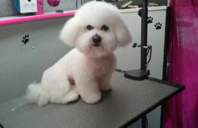 Golden Paws Pet Grooming - Lexington, MA