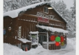 Villager Nursery & Landscape - Truckee, CA. Stopped by Villager for a Christmas Tree and sled on the odd December day.
