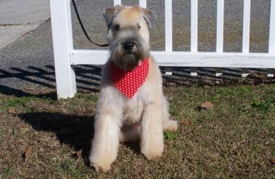 A Doggie Day Spa - Valdosta, GA