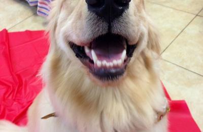 Fido Fido Dog Daycare & Boarding - Atlanta, GA