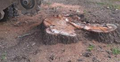 M&M Stump Grinding, LLC - Clinton, SC