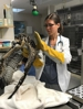Grafton Animal Hospital does a lot of work for local wildlife