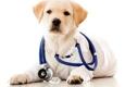 Seminole Animal Hospital - Sanford, FL