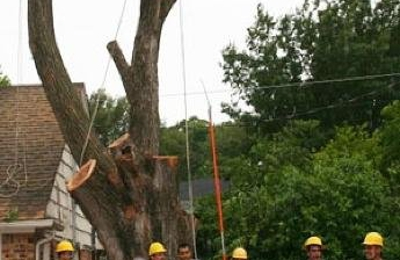 Molina Tree Service - Fort Worth, TX