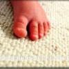 Delmont Carpet Cleaning Inc
